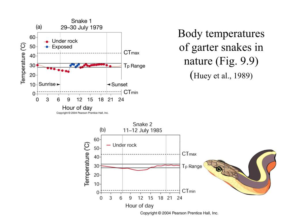 Body temperatures of garter snakes in nature (Fig. 9.9)