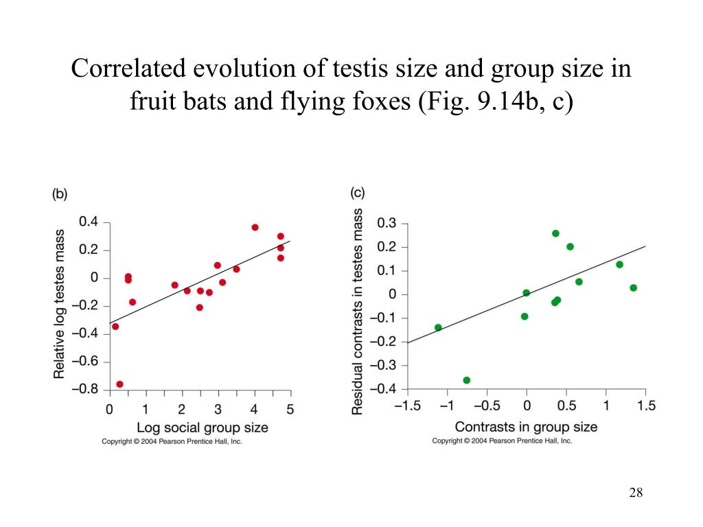 Correlated evolution of testis size and group size in fruit bats and flying foxes (Fig. 9.14b, c)