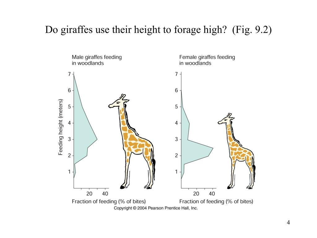 Do giraffes use their height to forage high?  (Fig. 9.2)