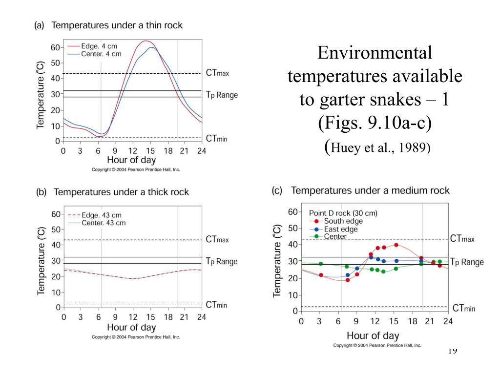 Environmental temperatures available to garter snakes – 1 (Figs. 9.10a-c)