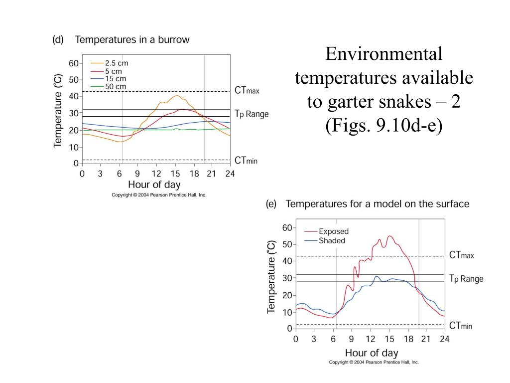 Environmental temperatures available to garter snakes – 2 (Figs. 9.10d-e)