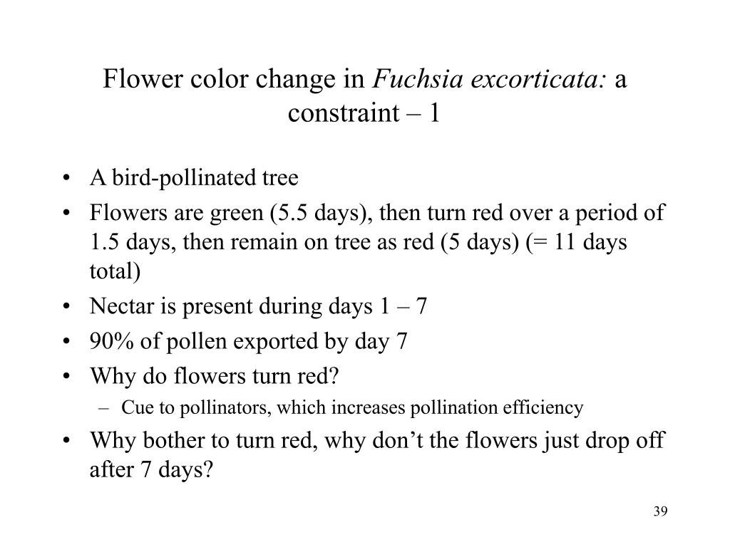 Flower color change in