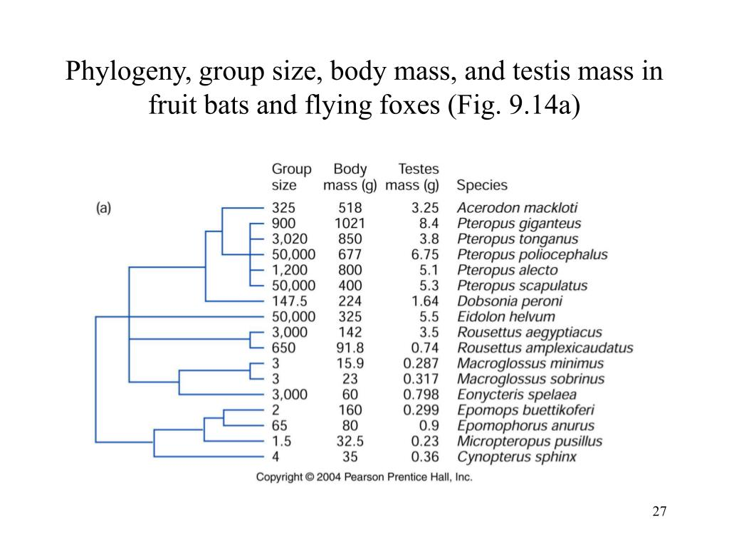 Phylogeny, group size, body mass, and testis mass in fruit bats and flying foxes (Fig. 9.14a)