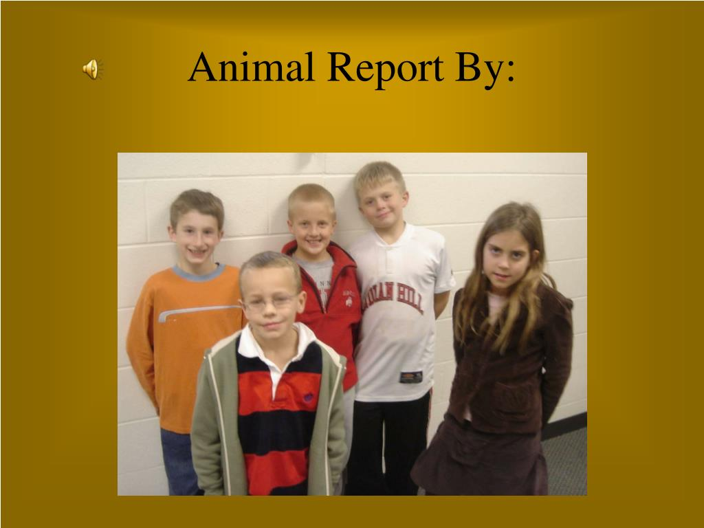 Animal Report By: