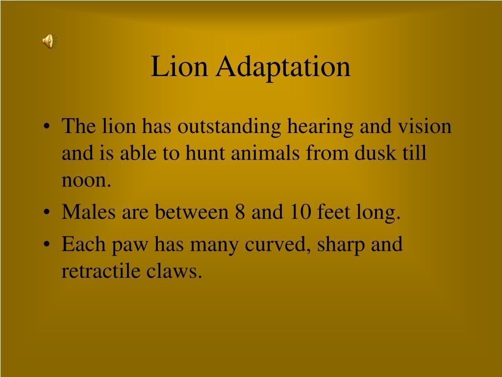Lion Adaptation