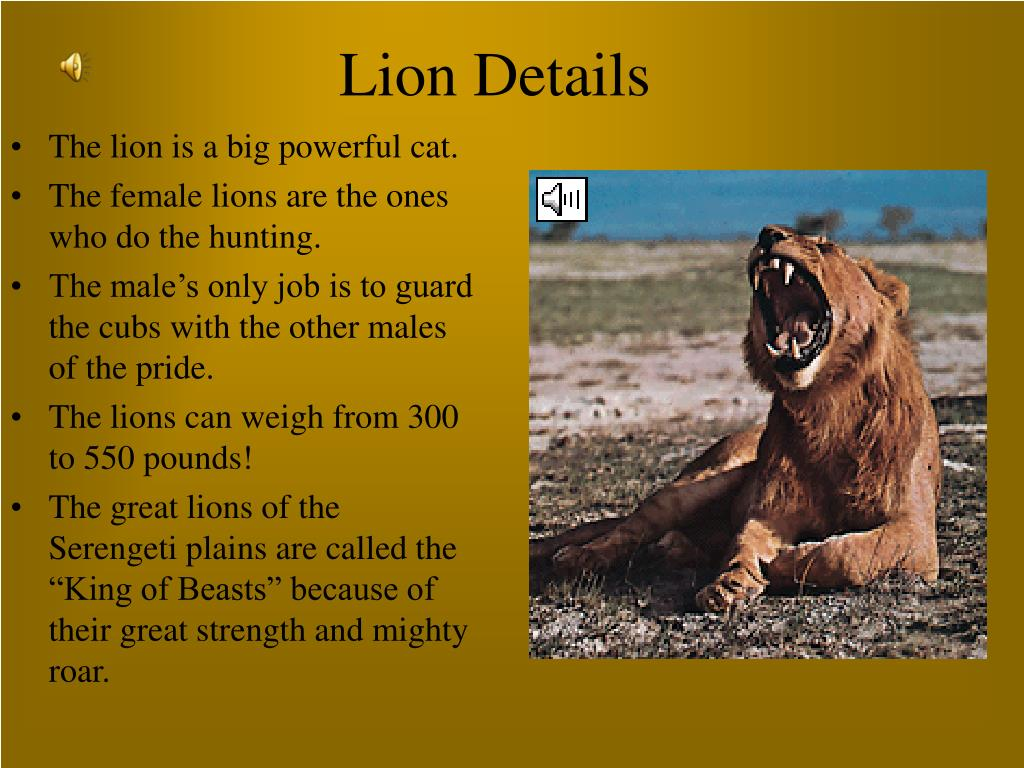 Lion Details