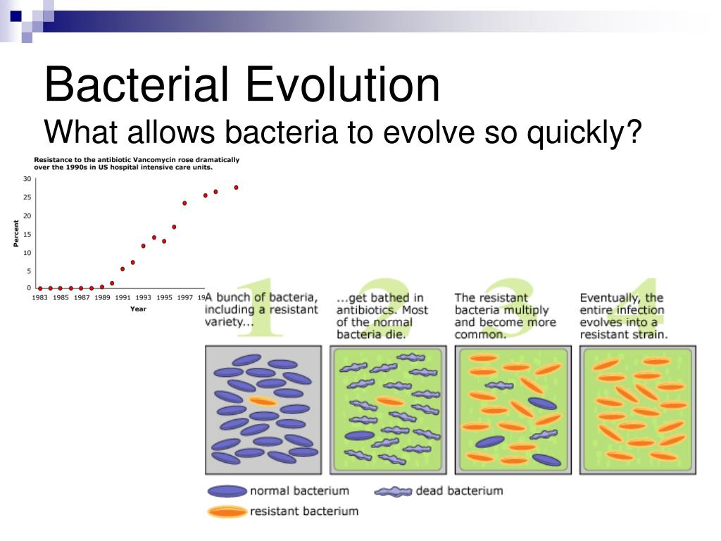Bacterial Evolution