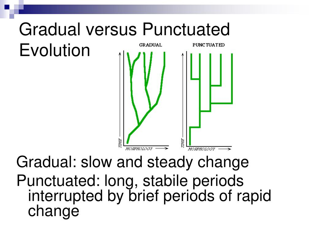 Gradual versus Punctuated Evolution