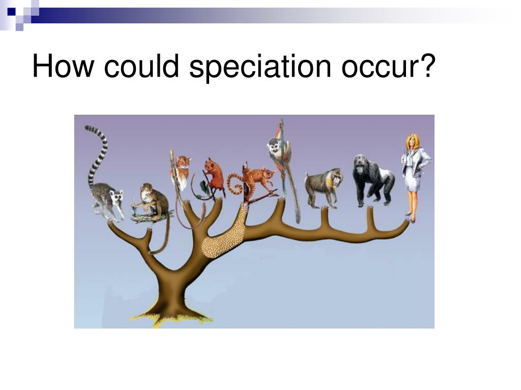 How could speciation occur?