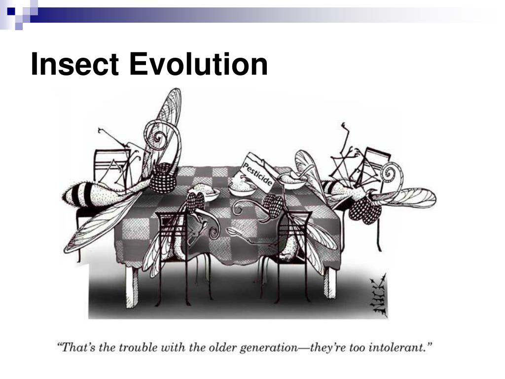 Insect Evolution