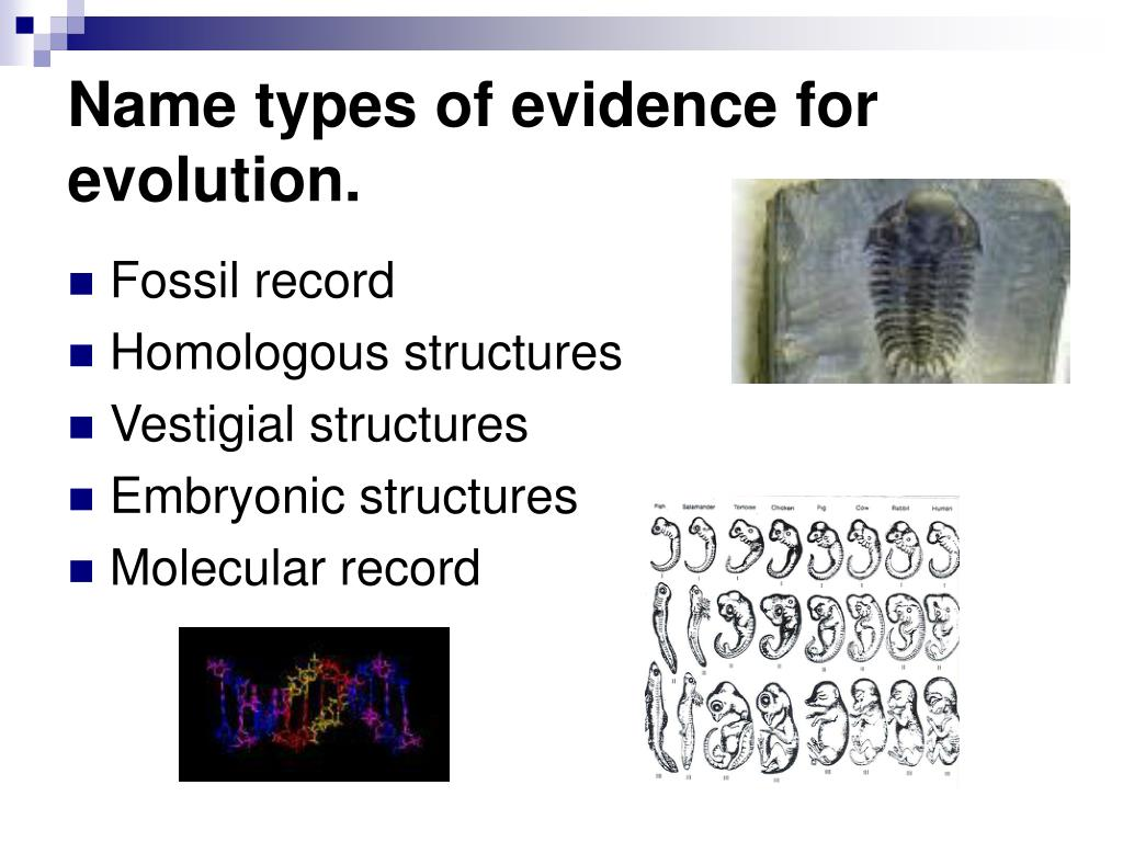 Name types of evidence for evolution.