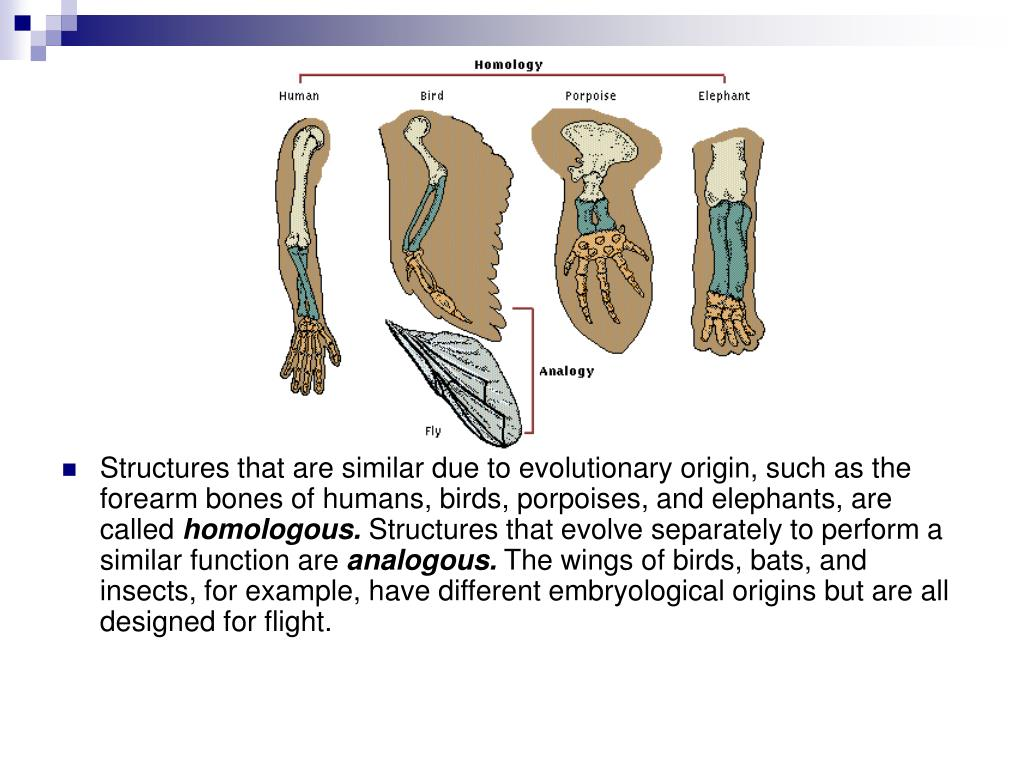 Structures that are similar due to evolutionary origin, such as the forearm bones of humans, birds, porpoises, and elephants, are called