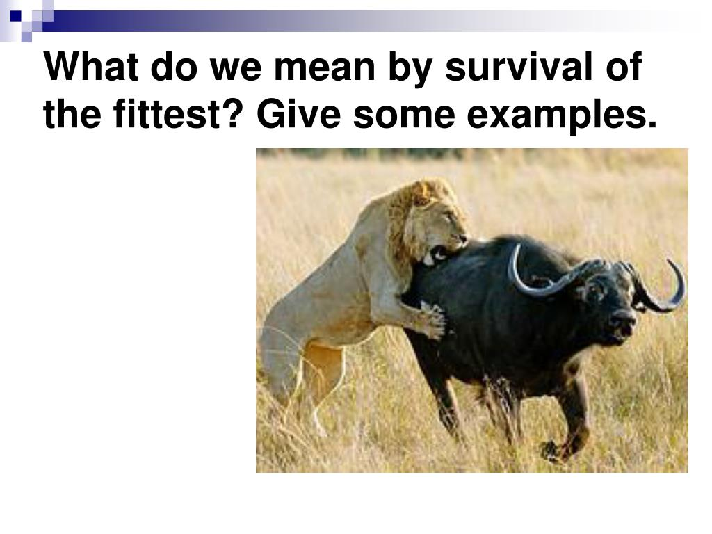 What do we mean by survival of the fittest? Give some examples.