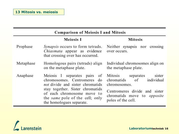13 Mitosis vs. meiosis