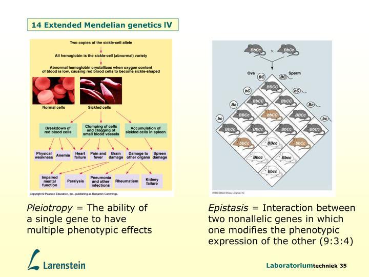 14 Extended Mendelian genetics l