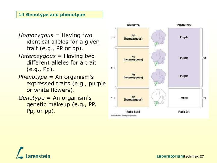 14 Genotype and phenotype