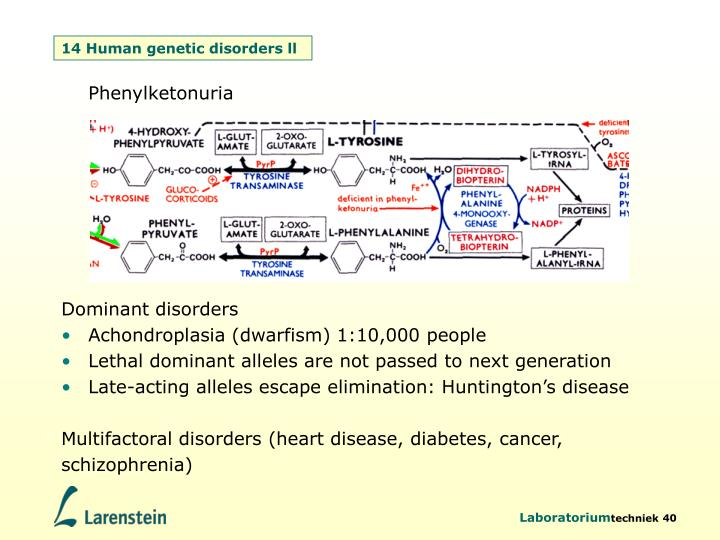 14 Human genetic disorders ll