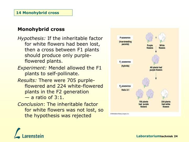 14 Monohybrid cross