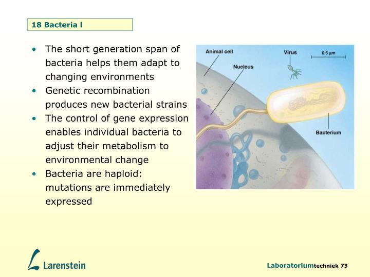 18 Bacteria l