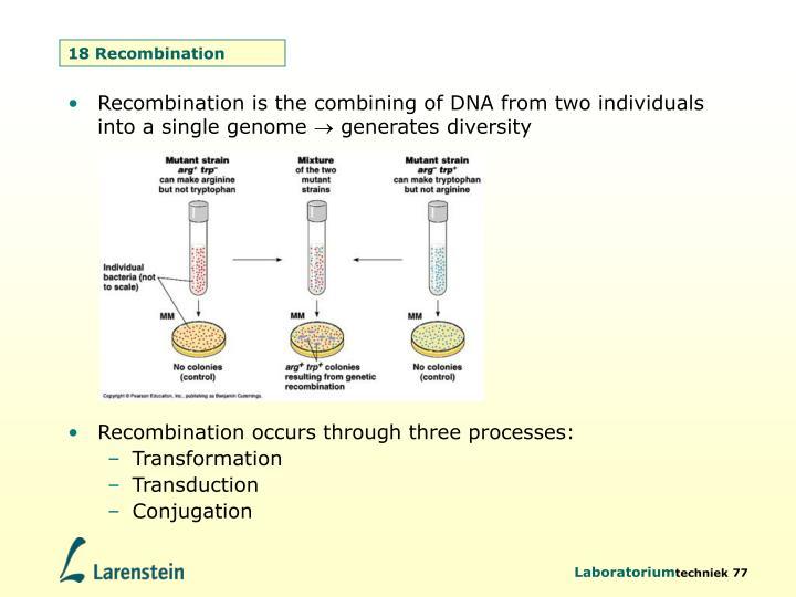 18 Recombination