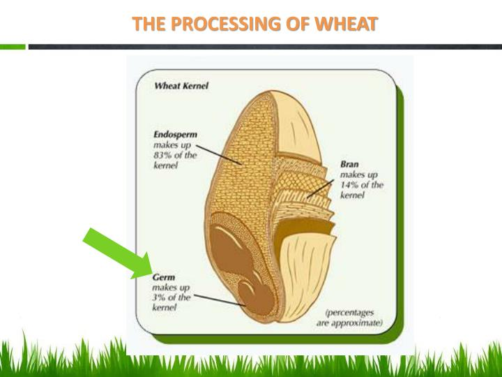 THE PROCESSING OF WHEAT