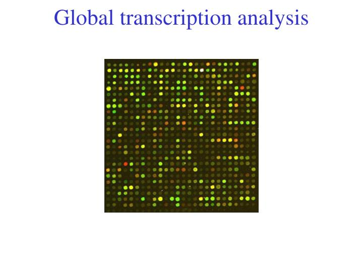 Global transcription analysis