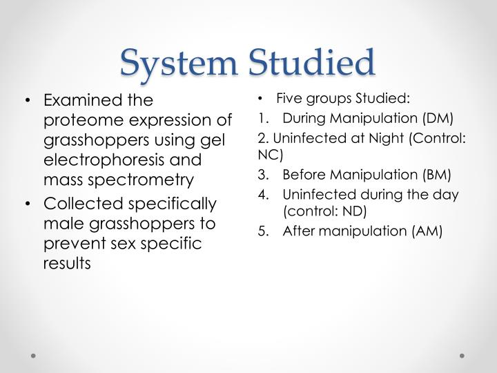 System Studied