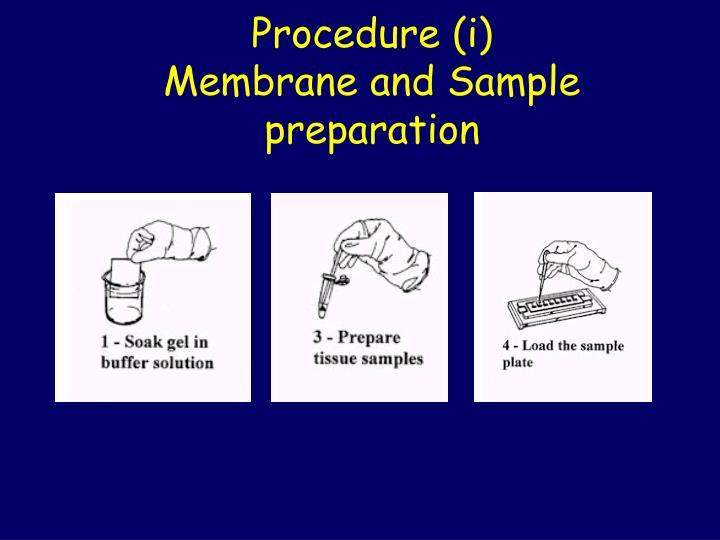 Procedure (i)