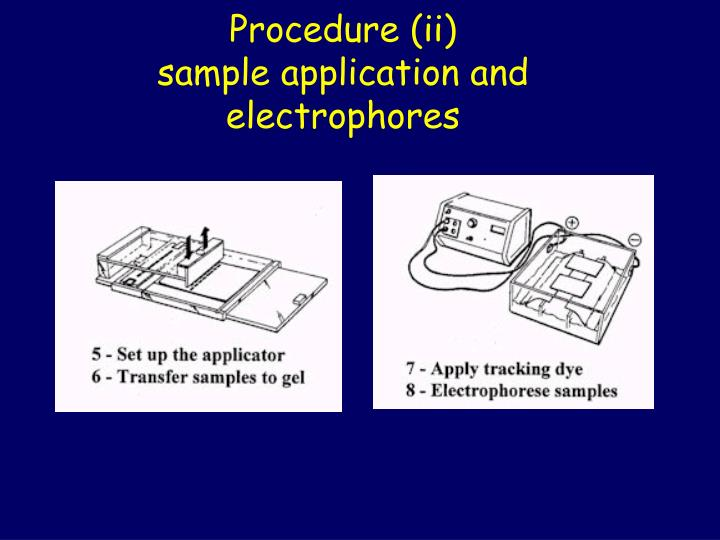 Procedure (ii)