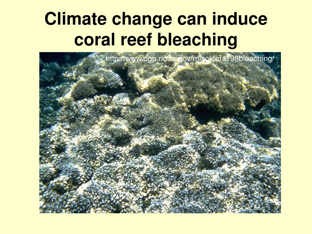 Climate change can induce coral reef bleaching