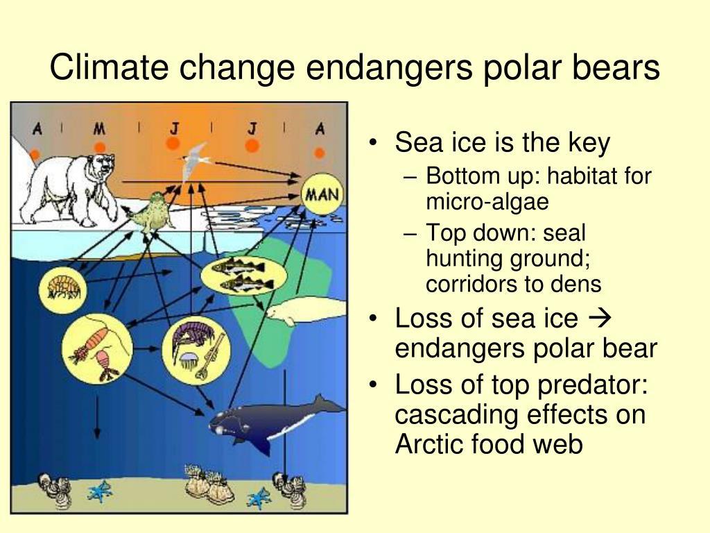 Climate change endangers polar bears