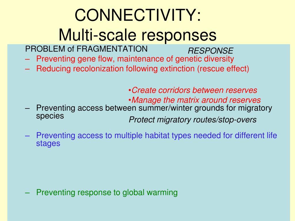 CONNECTIVITY: Multi-scale responses