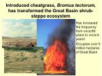 introduced cheatgrass bromus tectorum has transformed the great basin shrub steppe ecosystem