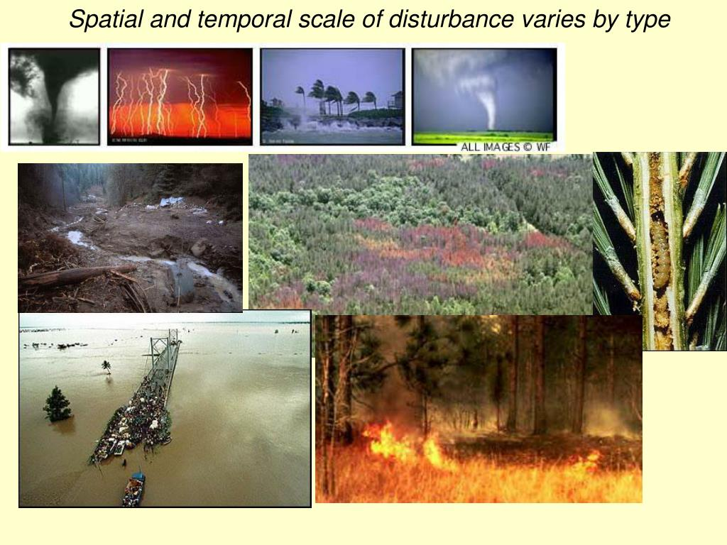 Spatial and temporal scale of disturbance varies by type