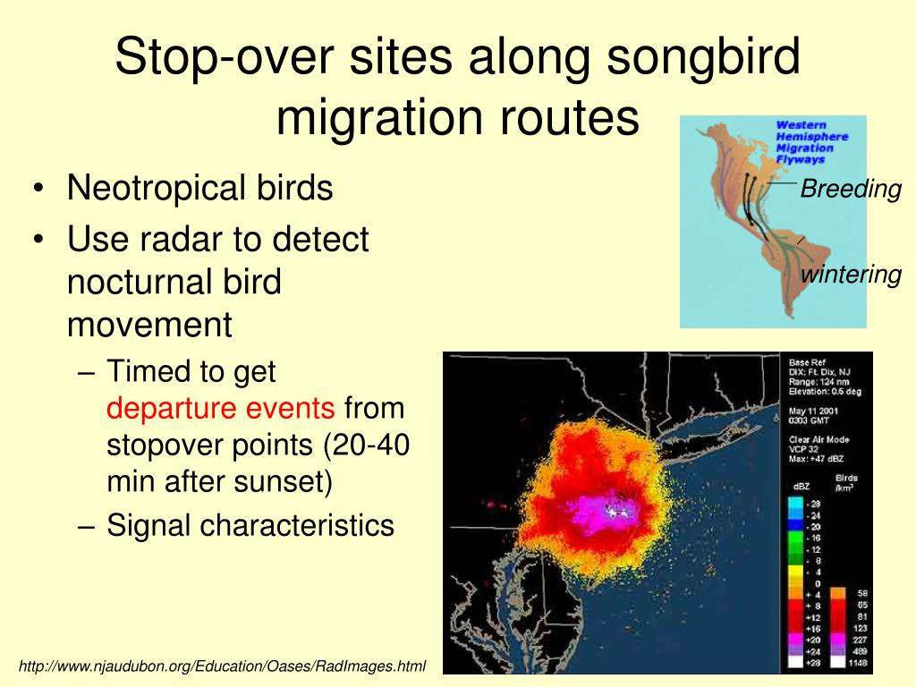Stop-over sites along songbird migration routes