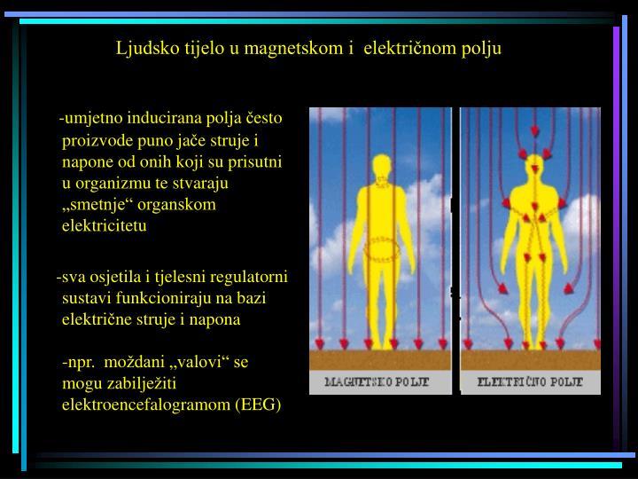 Ljudsko tijelo u magnetskom i  električnom polju