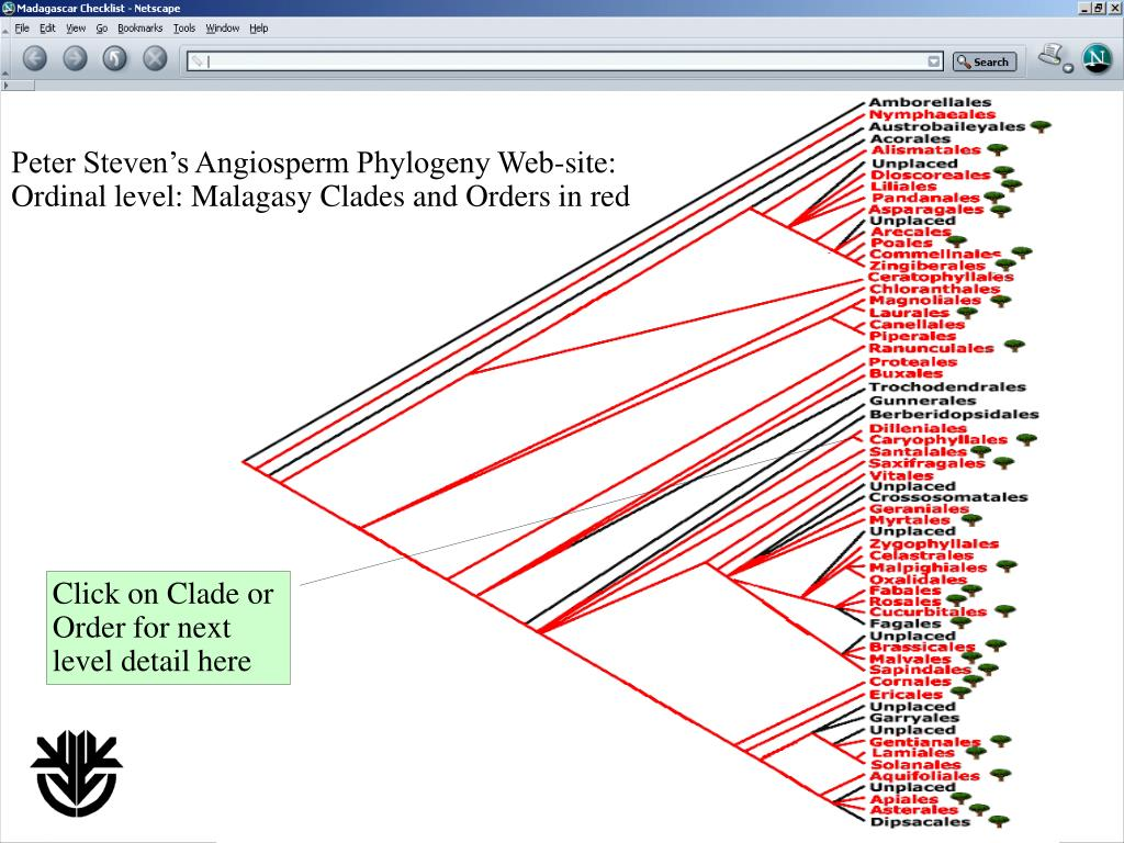 Peter Steven's Angiosperm Phylogeny Web-site: Ordinal level: Malagasy Clades and Orders in red