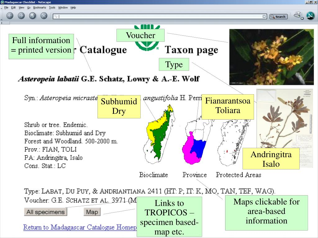Links to TROPICOS – specimen based-map etc.