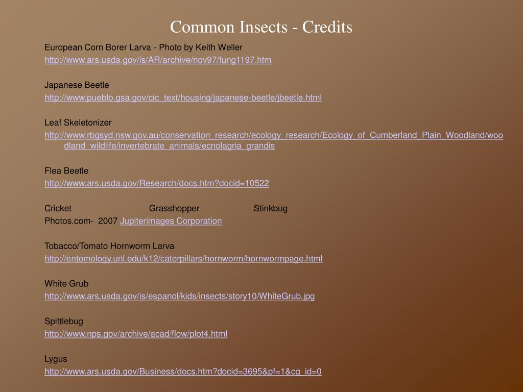 Common Insects - Credits