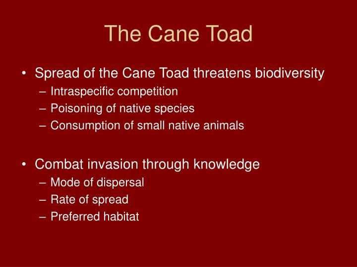 The cane toad l.jpg