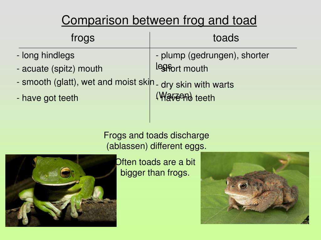 Comparison between frog and toad