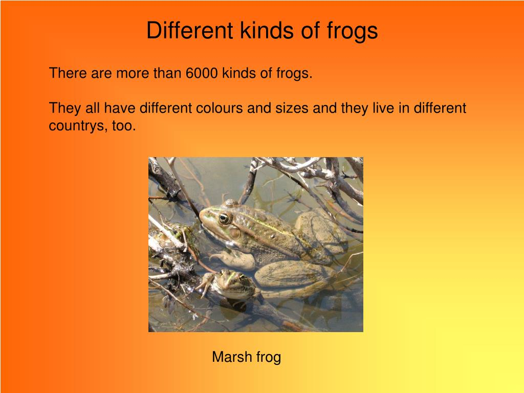 Different kinds of frogs