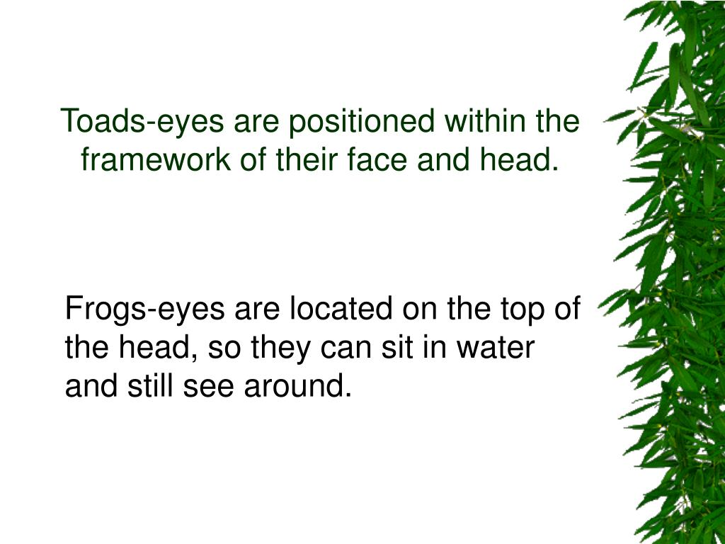 Toads-eyes are positioned within the framework of their face and head.