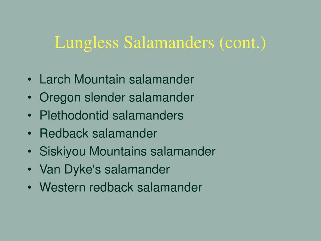 Lungless Salamanders (cont.)