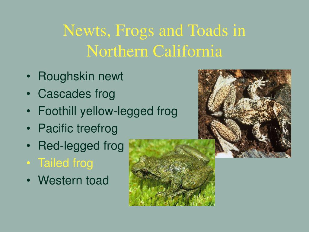 Newts, Frogs and Toads in