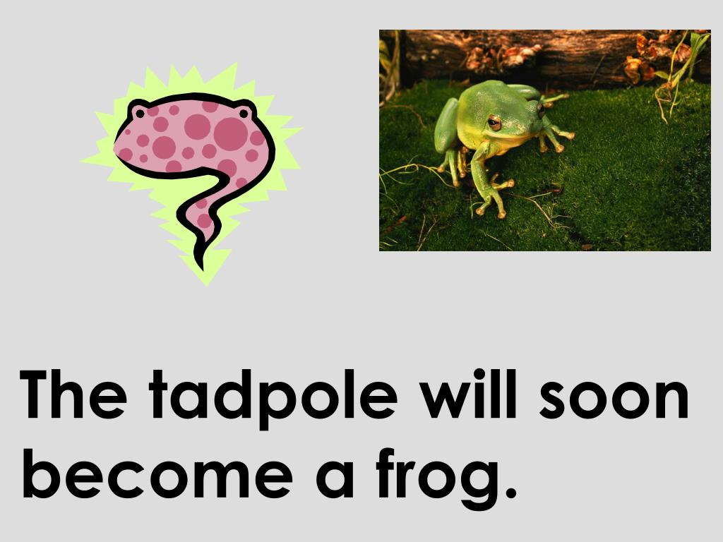 The tadpole will soon become a frog.