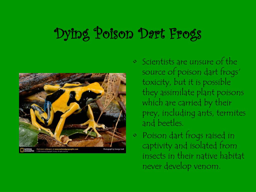 Dying Poison Dart Frogs