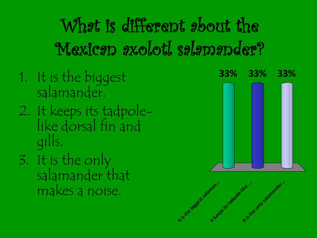 What is different about the Mexican axolotl salamander?
