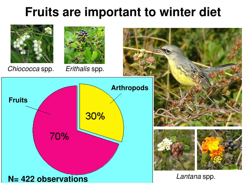 Fruits are important to winter diet