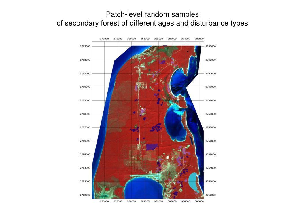 Patch-level random samples